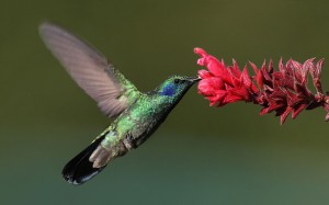 Google's Latest Search Overhaul: Hummingbird